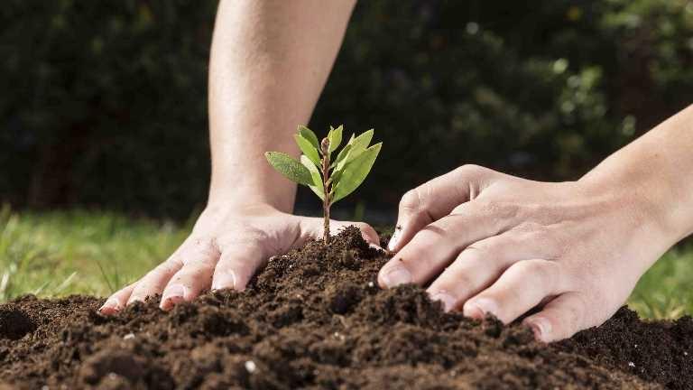 2020 Uluslararası Bitki Sağlığı Yılı ilan edildi
