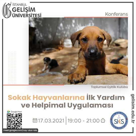 Sokak Hayvanlarına İlk Yardım ve Helpimal Uygulaması